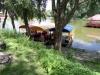 плот на реке Десна